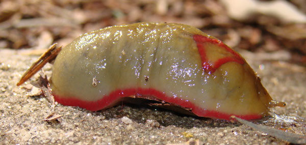 red triangle slug